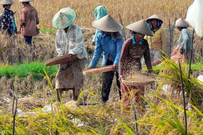 10 Daftar Kabupaten Riset Intervensi Kesehatan Berbasis Budaya di Indonesia